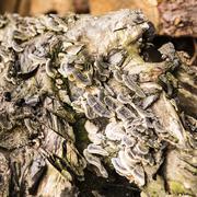 Texture of mushrooms on a tree stump Stock Photos
