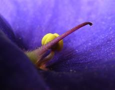 Closeup detail of pistil - stock photo
