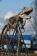 Tyrannosaurus Rex - T Rex Stock Photos