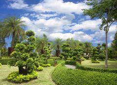 natural bonsai tree garden - stock photo