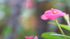 Macro pink flower 4k Stock Footage