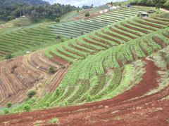 farmland hills ladder - stock photo