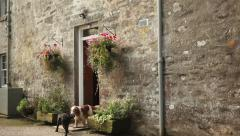 Cute funny dogs at house door Stock Footage