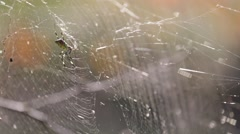 Close up of a spider on his web in a park, Tokyo, Japan Stock Footage