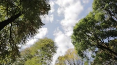 Trees and sky with clouds, Tokyo, Japan Stock Footage