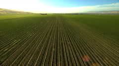 Aerial California USA Farmland crops field vegetation agricultural - stock footage