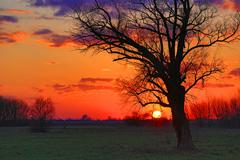 Old tree in steppe on sunset - stock photo
