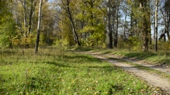 Road panorama in the forest Stock Footage