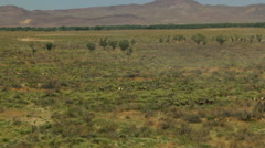 Aerial American Wild horses Rangeland BLM Land USA Stock Footage