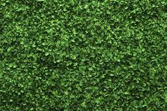 Green box hedge background with green leaves Stock Illustration
