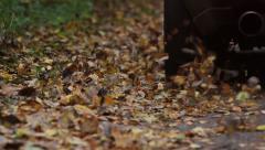 Fallen Leaves On The Roadside - stock footage