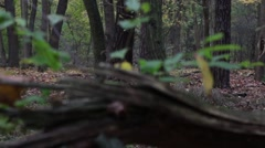 Tracking shot from a defragmented tree stump in the autumn forest Stock Footage