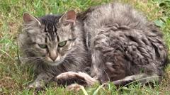 ULTRA HD 4K Cat animal hunt green grass wildlife cute alert hungry famine watch  Stock Footage