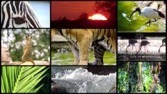 A tribute to wildlife montage Stock Footage