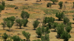 Aerial Wild horses Rangeland herd animal nature Plains USA Stock Footage