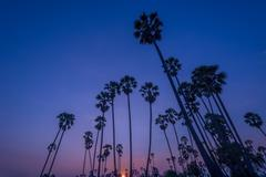 Sunset with coconut tree Stock Photos