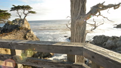 Motion Control Dolly Shot of Lone Cypress in Pebble Beach, California Stock Footage