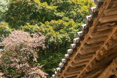 Underside of korean traditional eaves Stock Photos