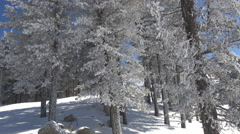 Beautiful pine fir forest mountain sunny day winter season peaceful place snow  Stock Footage