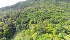 Aerial shot of the jungle - stock footage