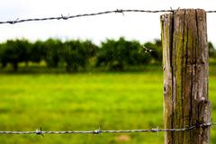 Spider Web near the Wooden Fence Kuvituskuvat