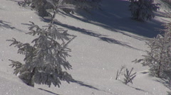 Idyllic place mountain hill covered white snow sunshine fir covered forest day Stock Footage