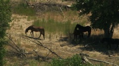 Stock Video Footage of Aerial herd Wild horse livestock freedom scrubland USA