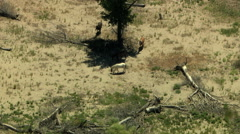 Aerial herd Wild horse livestock freedom scrubland USA Stock Footage