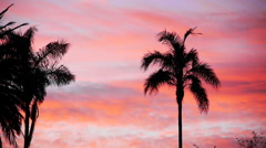 Tropical Palm Trees Silhouette with Heavenly Afterglow Stock Footage