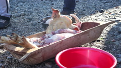 Raw Chopped Pig Meat Stock Footage