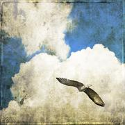 Cloudy sky with flying rapacious Stock Photos