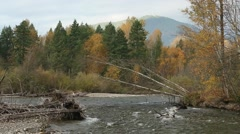 Adams River Autumn, British Columbia - stock footage