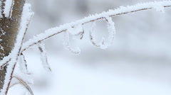 Willow tree on branches covered by ice in winter Stock Footage