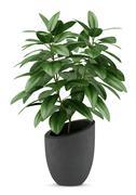 Houseplant in black pot isolated on white background Stock Illustration