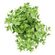 top view of balm plant in pot isolated on white background - stock illustration