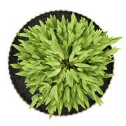 Top view of potted houseplant isolated on white background Stock Illustration