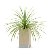houseplant in wooden pot isolated on white background - stock illustration
