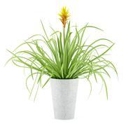 Guzmania plant in pot isolated on white background Stock Illustration