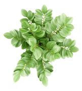 top view of houseplant in pot isolated on white background - stock illustration