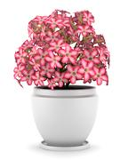 Pink flowers in pot isolated on white background Stock Illustration