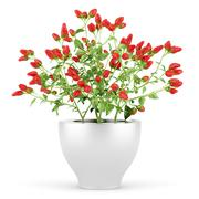 Paprika plant in pot isolated on white background Stock Illustration
