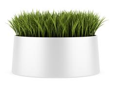 Stock Illustration of decorative grass in pot isolated on white background