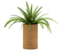 fern plant in pot isolated on white background - stock illustration