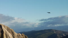 Andean Condor - soaring near cliffs Stock Footage
