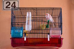 Little Bird in his cage Stock Photos