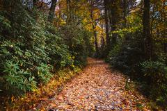 autumn color along a  trail at moses h. cone park, on the blue ridge parkway, - stock photo