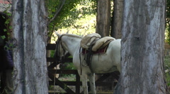 Argentina Gauchos - Saddling a White Horse Stock Footage