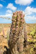 Closeup view of a cactus in La Guajira Stock Photos
