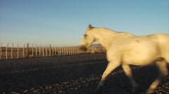 Argentina Horses - La Elvira 58 Stock Footage