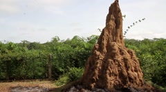 Africa termite mounds Guinea Bisseau - stock footage